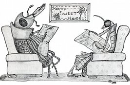 bugs at home