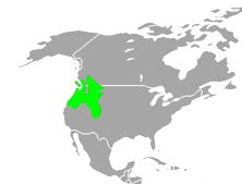 Distribution of hobo spider in North America